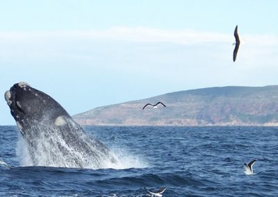 Plett-Tourism-shows-off-marine-wildlife-to-travel-agents-800x400