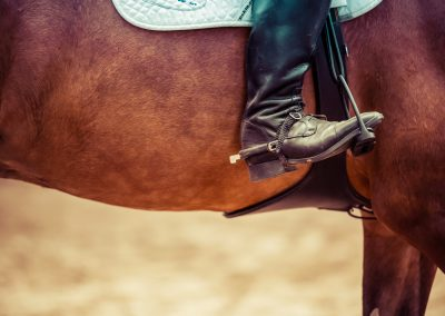 horse riding pexels-photo-93489