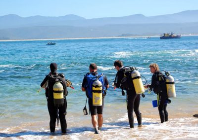 pro dive scuba diving plettenberg bay 10